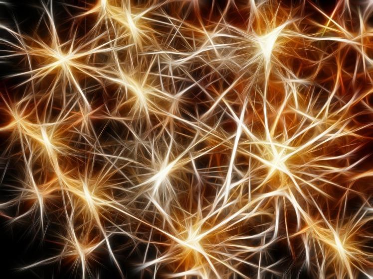 neurones-connexion